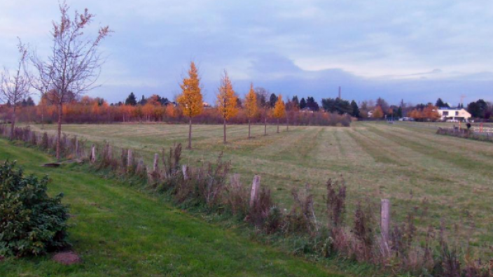 Von Spaziergängern - wie auch jetzt im Herbst - gerne genutzt: Der Bereich am Rande des Neubaugebietes Eichholz. Im Sommer sieht es natürlich freundlicher aus. Die Fläche für das Pilotprojekt wartet schon.