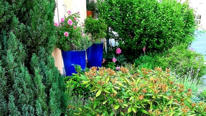 Grüne Vorgärten bieten Lebensraum